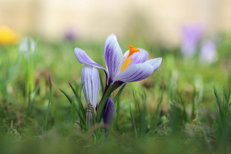 03_czas_przysłona-glebia_ostr-kwiaty_____opr
