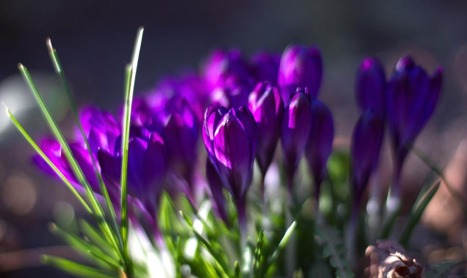 AFO_ewa_lemke_kwiaty3-960x572.jpg