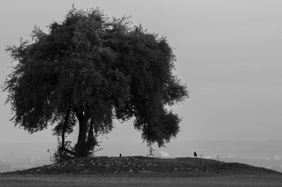 podstawy_fot_glebia_ostrosci_01_drzewo-960x638.jpg