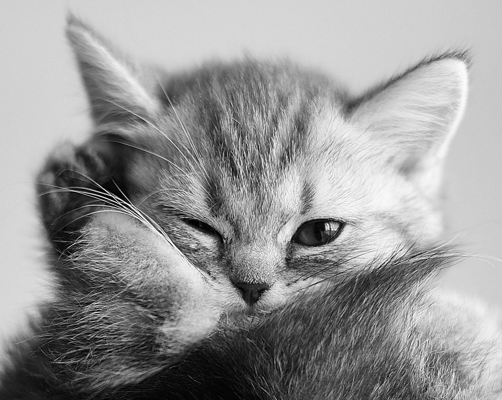 Zdjęcia dziecięce, kobieta, kot i ważka. Wyróżnione zdjęcia po opinii na temat zdjęć na kursach online. 318 Kursy i 310 AFO