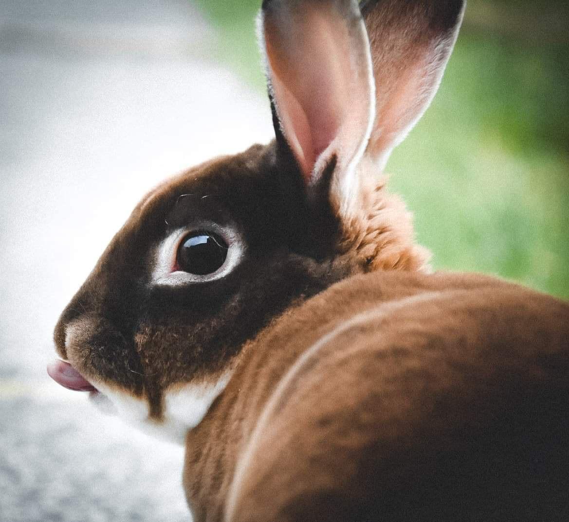 Portrety dziecięce i królik. Kursy fotografii online. Wyróżnione zdjęcia. 350 Kursy i 342 AFO