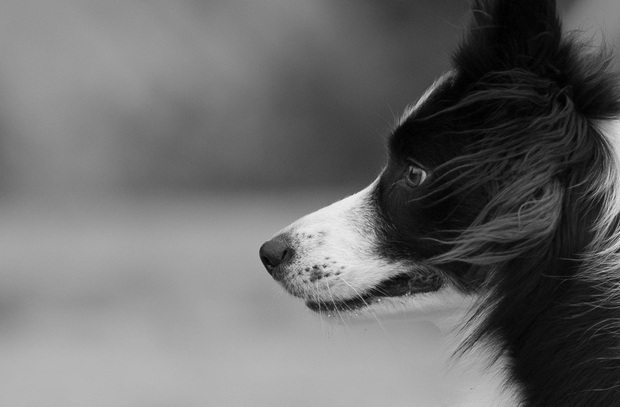 Zdjęcia dziecięce, okolicznościowe i psa. Kursy fotografii online. 347 Kursy i 366 AFO