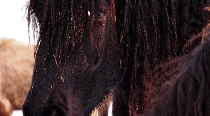 Portrety dziecięce i koń. recenzja zdjęć online. Nauka fotografii przez internet. 390 kursy i 383 afo